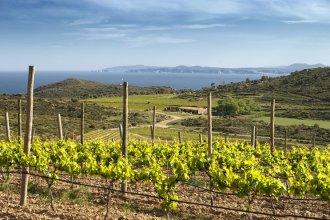 –Le vin de l'Empordà– ça veut dire plaisir, gastronomie, nourriture pour le corps et l'esprit