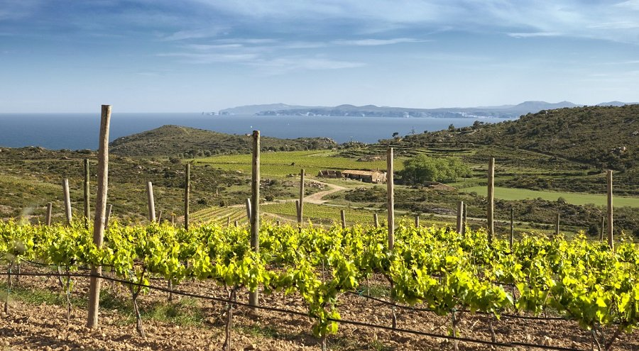 """""""El vi de l'Empordà és plaer, gastronomia, un aliment per al cos i per a l'esperit"""" per Anna Espelt"""